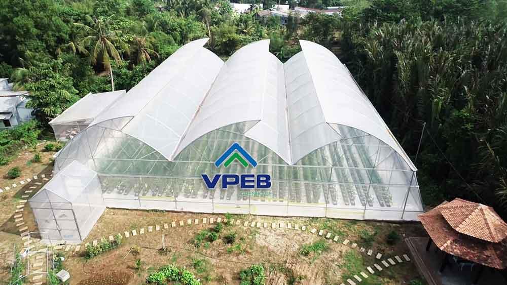 Mô hình dưa lưới trong nhà kính nông nghiệp công nghệ cao tại Q9 Tp HCM