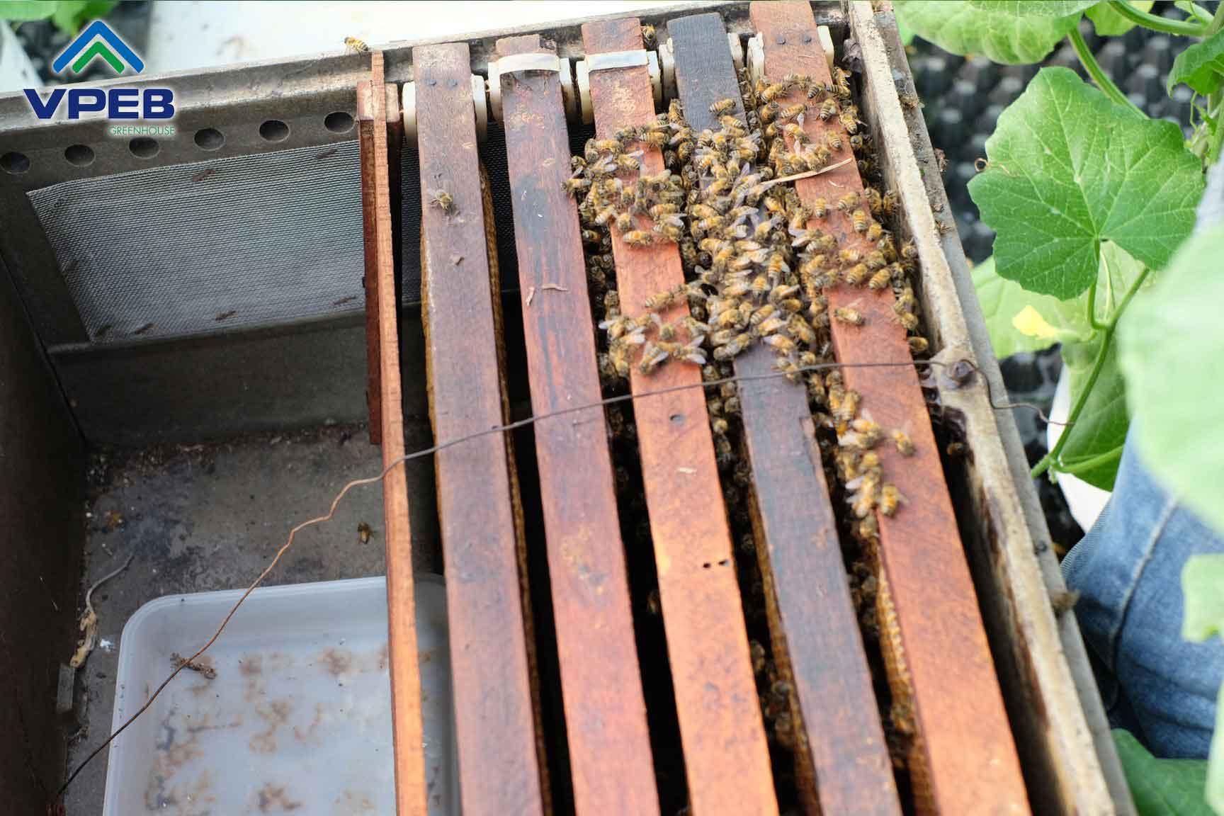 Nơi chứa ong và mật ong thu được từ việc hút mật hoa
