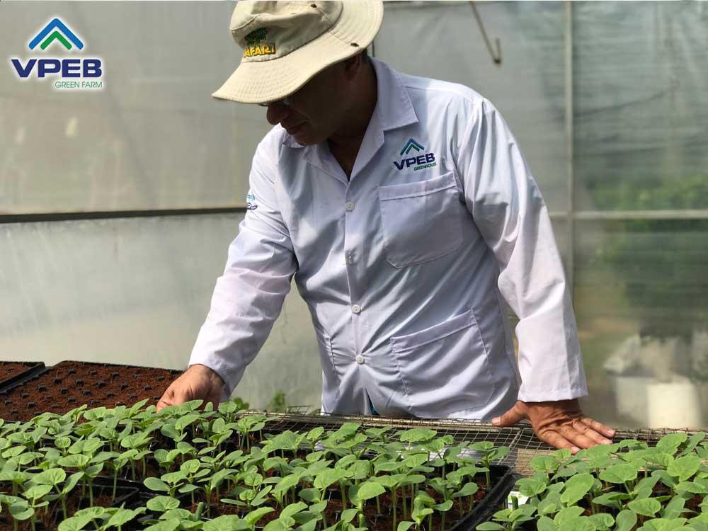 Luôn luôn được chăm sóc theo dõi bởi chuyên gia nông nghiệp VPEB