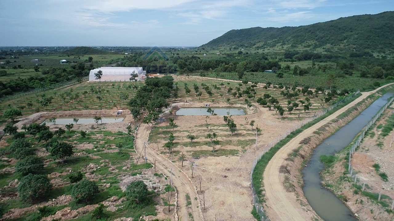 Dự án nhà kính trồng dưa lưới được thực hiện tại Bình Thuận