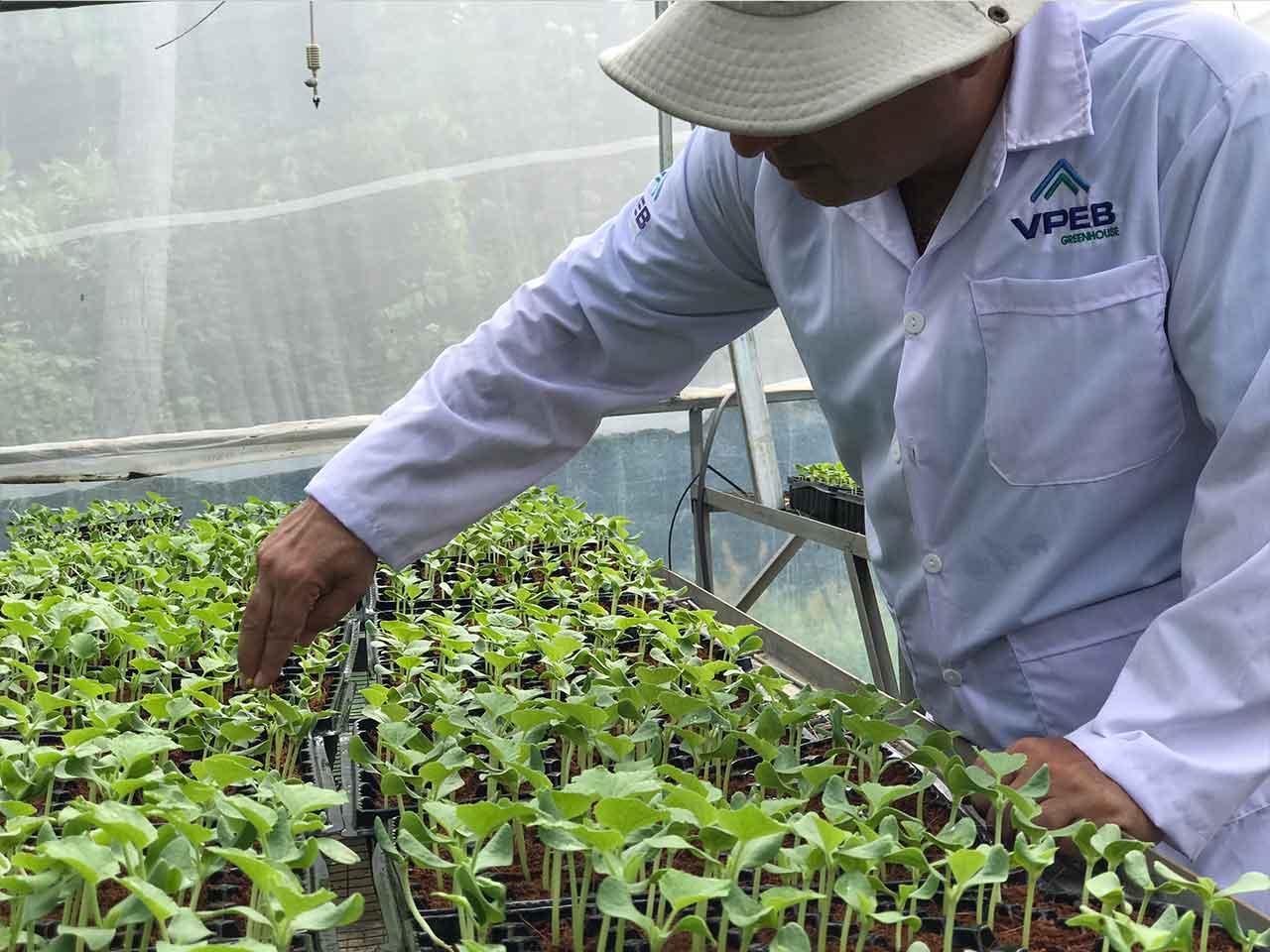 Chuyên gia nông nghiệp VPEB chăm sóc cây con giống