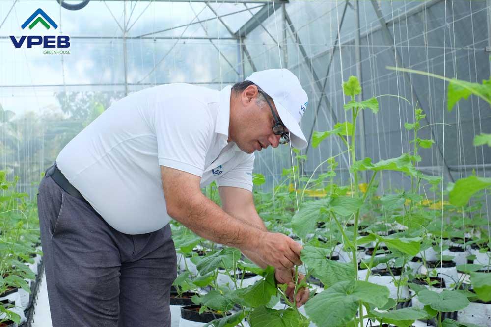 Chăm sóc farm dưa lưới 3 tuần tuổi