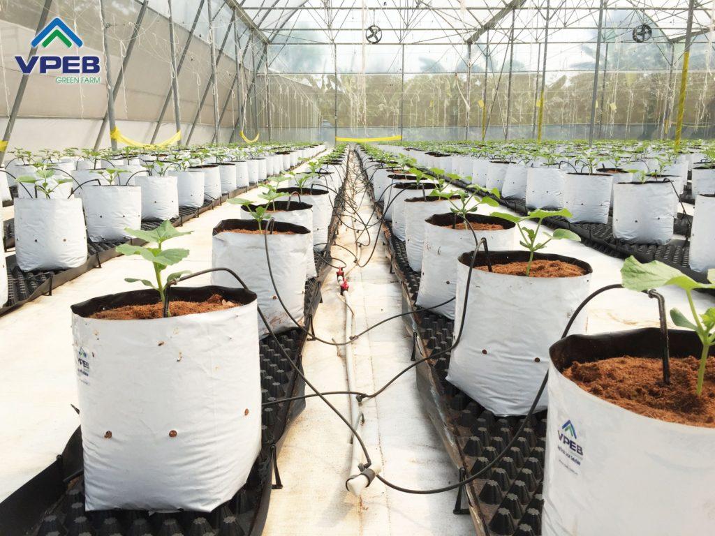 Hệ thống tưới nhỏ giọt sử dụng trong mô hình trồng dưa lưới