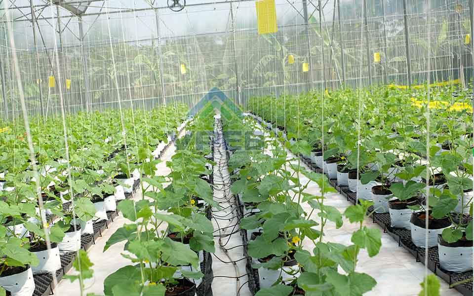 Thi công nhà kính trồng dưa lưới uy tín tại Bình Thuận